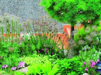 De vilde, vintergrønne hitter i haverne